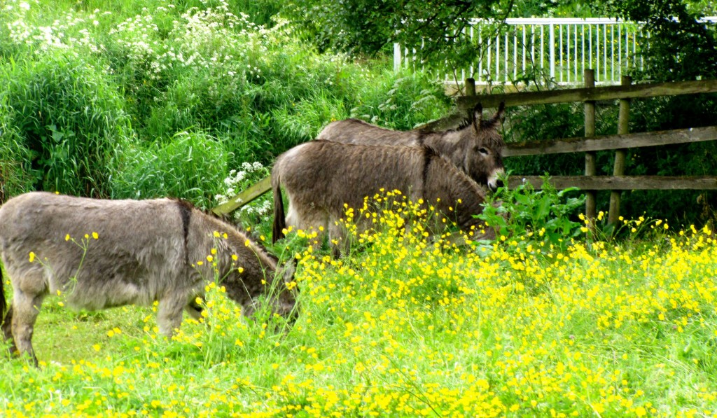 There were donkeys in a nearby field. Apparently, there's a donkey sanctuary nearby.