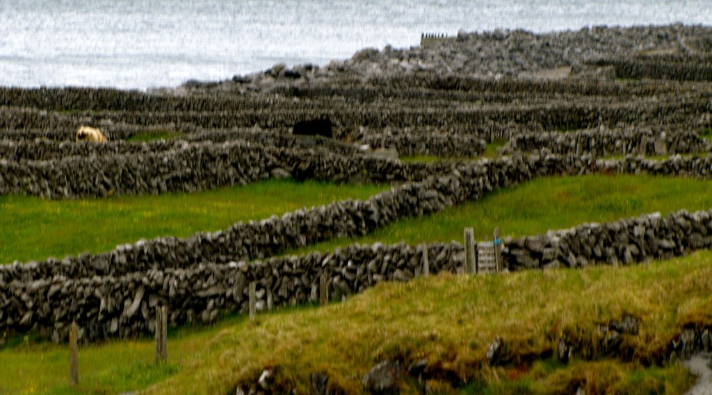 Much of the island is a maze of these stone fences, with narrow roads running between them.