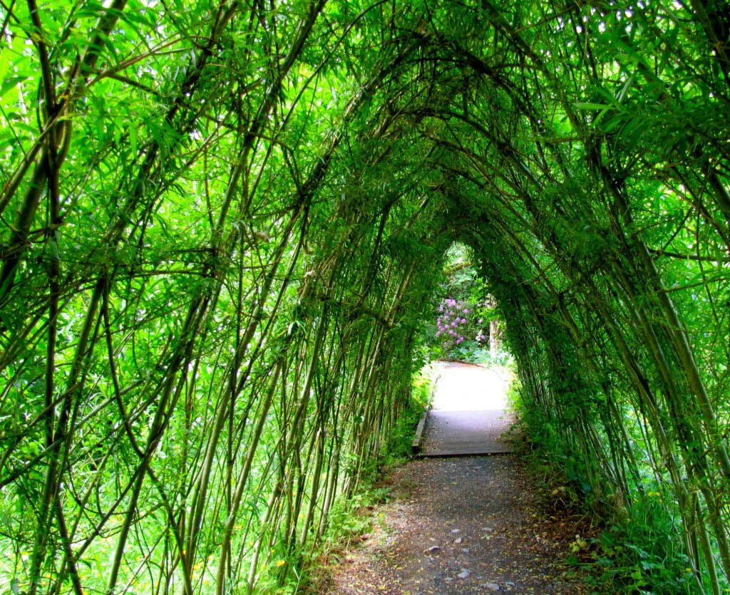 The woven tunnel of willows is also far more impressive when its green, rather than just bare branches.