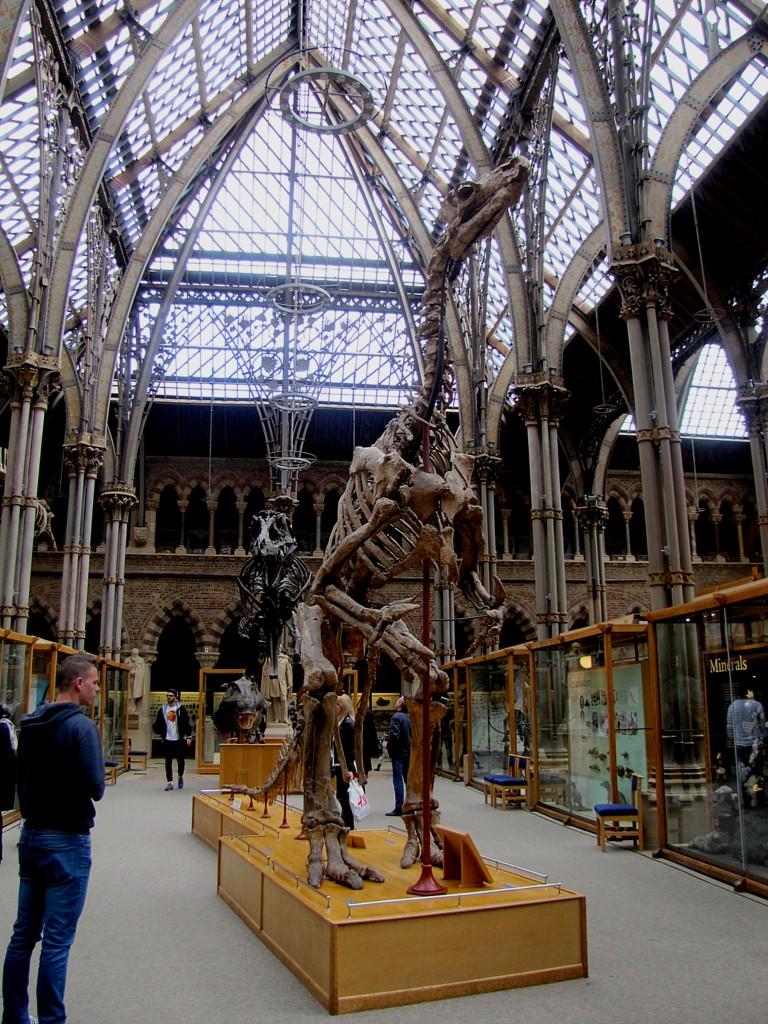 An iguanodon skeleton.