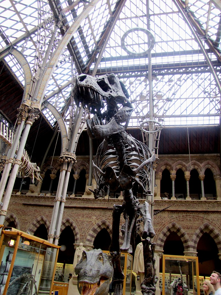 A t-rex skeleton. This one looms really nicely.