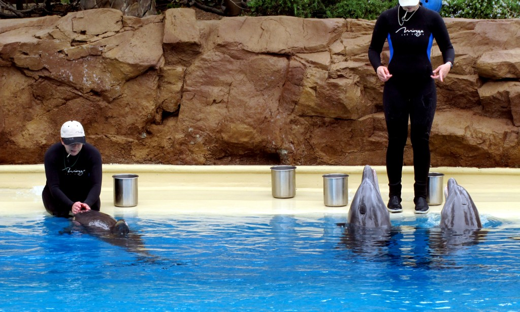 Here are the trainers, feeding the dolphins.